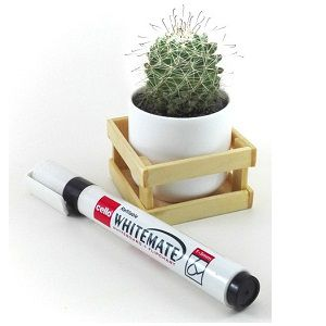 Irish Red Head Cactus Plant |  রেড হেড ক্যাকটাস