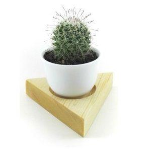 Red head Cactus Plant | রেড হেড ক�যাকটাস