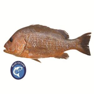 Red Snapper Sea Fish BD | Red Snapper Sea Fish