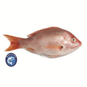 Red Snapper Sea Fish