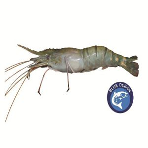 Golda Prawn Sea Fish