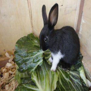 Rabbit Babies Price BD | Rabbit Babies