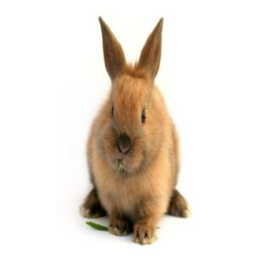 Male Rabbits Price BD | Male Rabbits