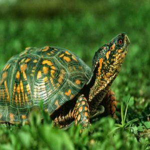 The Green Tortoise Price BD | The Green Tortoise