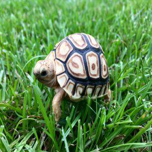 Tortoise Price BD | Tortoise