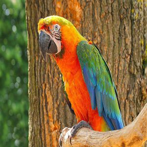 Bird hybrid Catalina Macaw Price BD | Bird hybrid Catalina Macaw