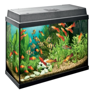 Fish Aquarium Price BD | Fish Aquarium