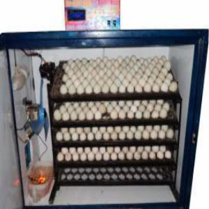 Egg Incubators Price BD | Egg Incubators